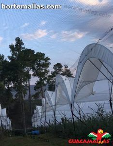 field of cultivation with anti-bird mesh