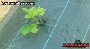 cultivo usando malla anti maleza