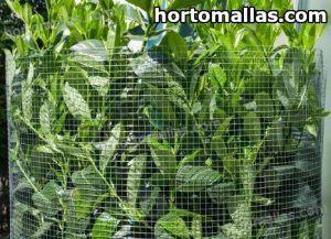 malla tutora en cultivo de plantas