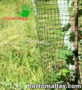 malla chickenmalla colocada para proteger planta
