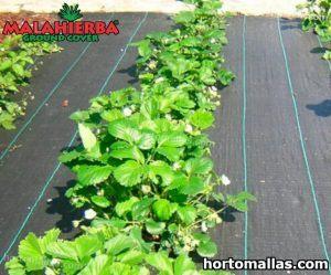 tela anti maleza en cultivos de jardin