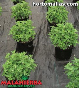 campo de cultivo con MALAHIERBA ground cover
