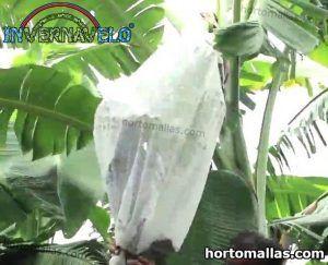 bolsa con INVERNAVELO® protegiendo cultivos de platanos