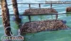 jaulas flotantes instaladas en lago