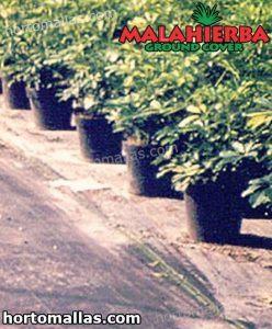 plantas en jardin con la tela MALAHIERBA® ground cover