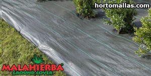 tela MALAHIERBA® Ground cover usada para cuidar cultivos.