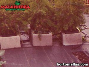 tela malahierba colocada sobre jardin de cultivos