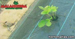 plantaciones protegidas con tela mala hierba