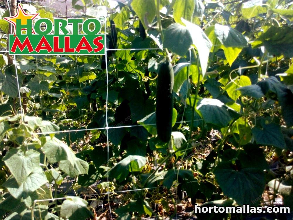 HORTOMALLAS® cucumber trellis raffia cucumber pickle support tutor