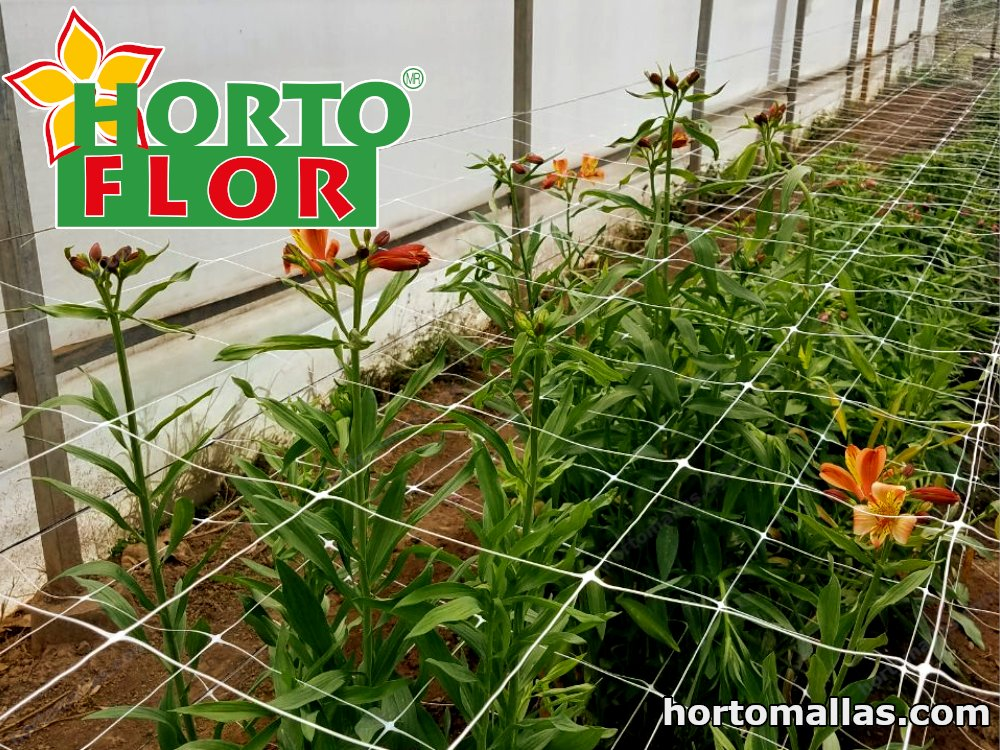 HORTOFLOR® improves plant health management, development of the plant, and distribution of the flowers