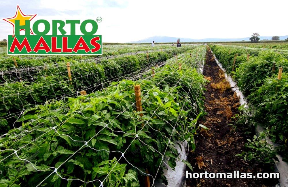 tomato cages with HORTOMALLAS® trellis netting