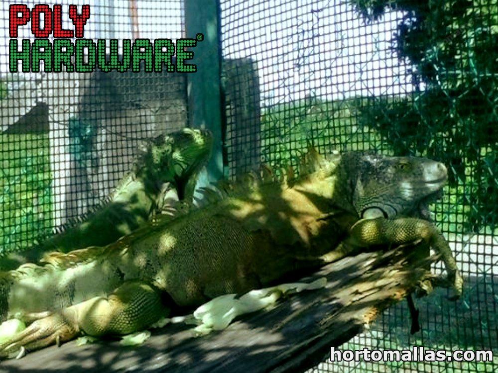 iguana cage mesh
