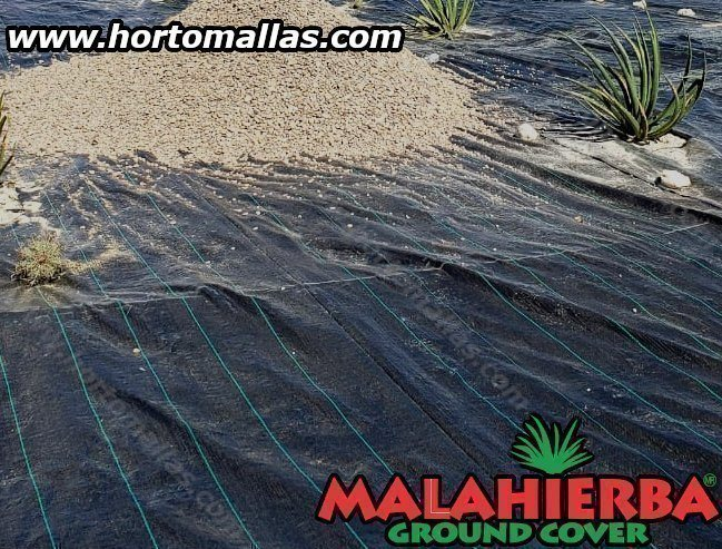 Malahierba Ground Cover