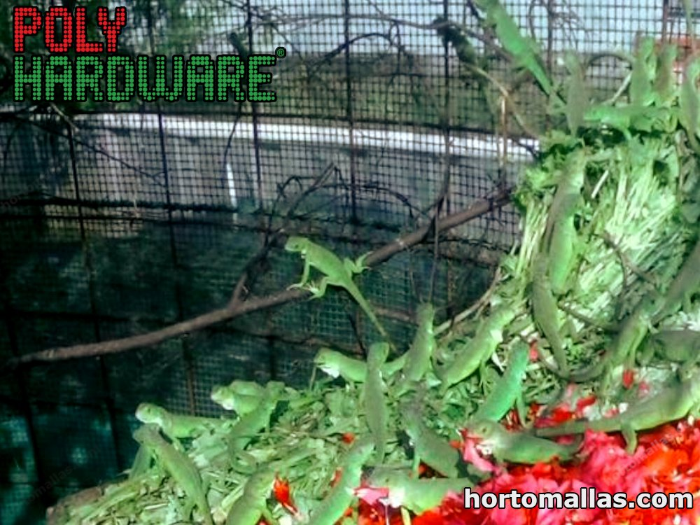 The plastic mesh for iguana cages