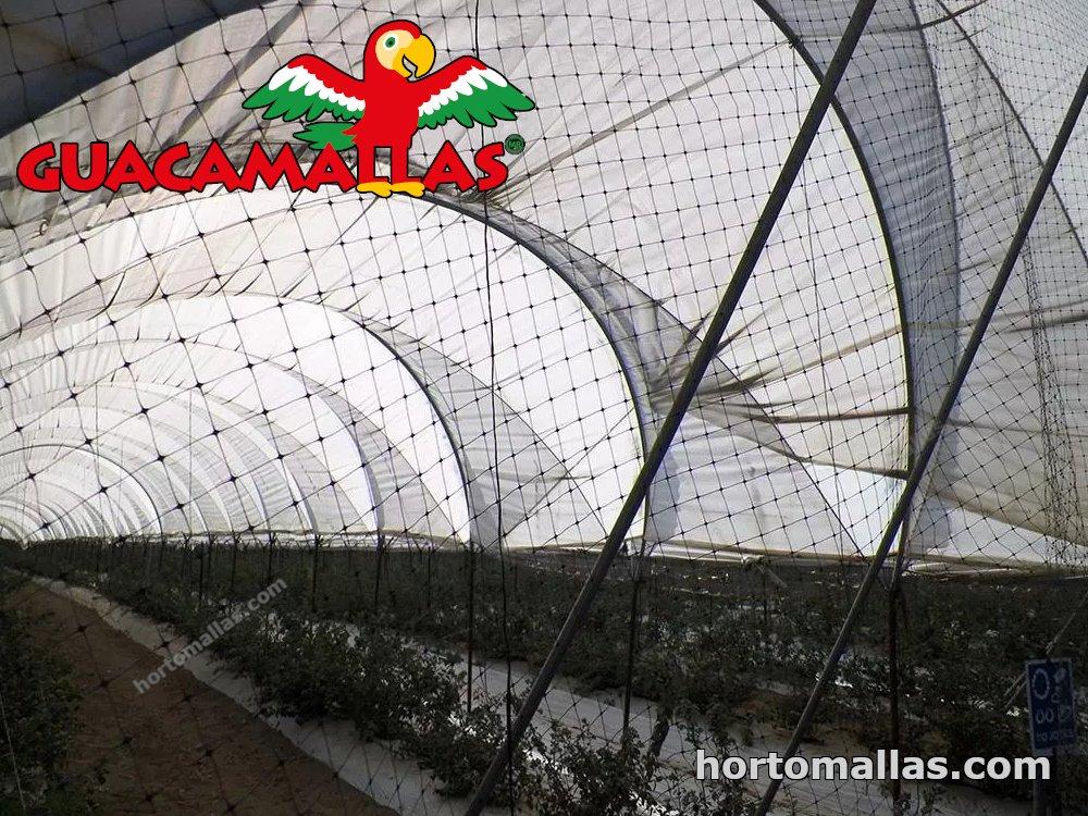 El uso de Mallas como una Herramienta de Control de Aves en Viñedos.