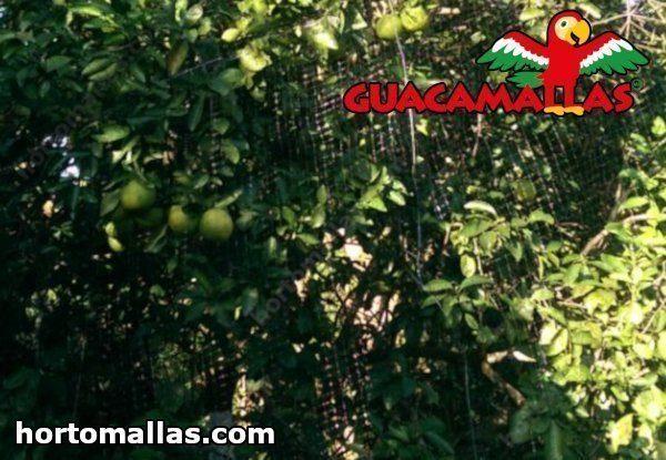 malla anti pajaros guacamallas en arbol