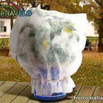 cubrir árbol de cítricos con manta térmica