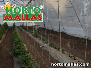 Cucumber Trellis Netting