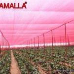 malla roja para efecto fotoselectivo en cultivo