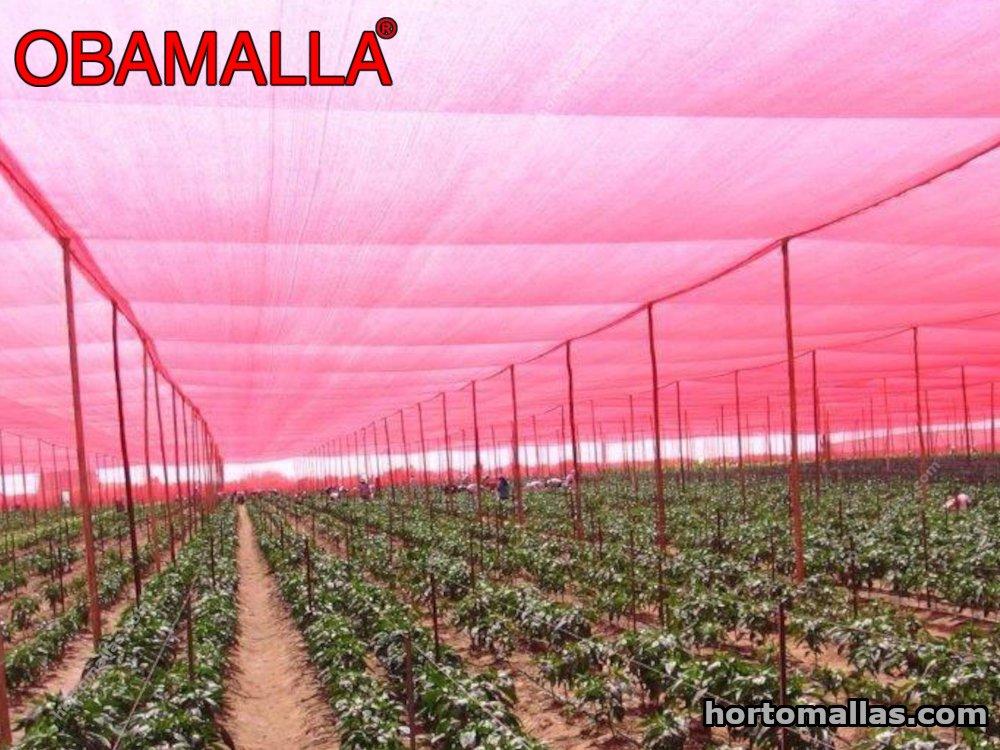 Efecto de las Mallas de Sombreo de Colores sobre los Parámetros de la Hoja de la Planta y la Calidad del Fruto del Tomate.