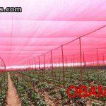 Malla roja en cultivos