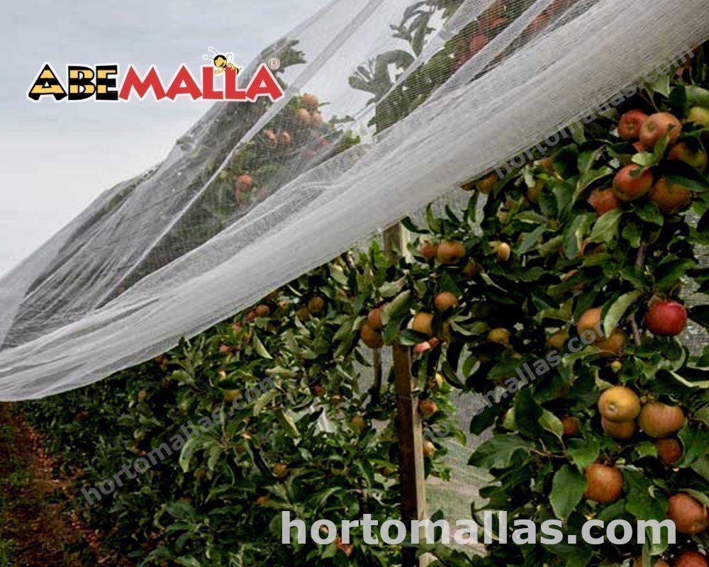 Aumentar el costo de tus cultivos, al evitar la polinización de las abejas, es posible gracias a la red ABEMALLA.