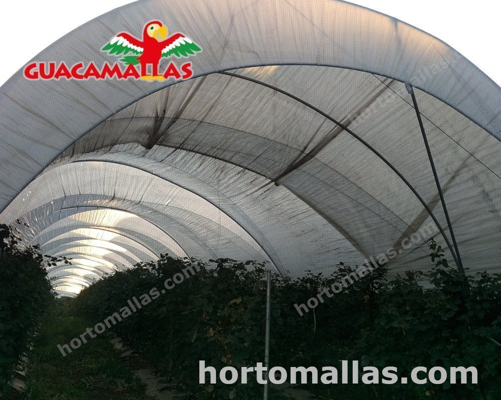 malla anti pájaros GUACAMALLAS® es la perfecta protección contra esas indeseables aves que amenazan tus cultivos
