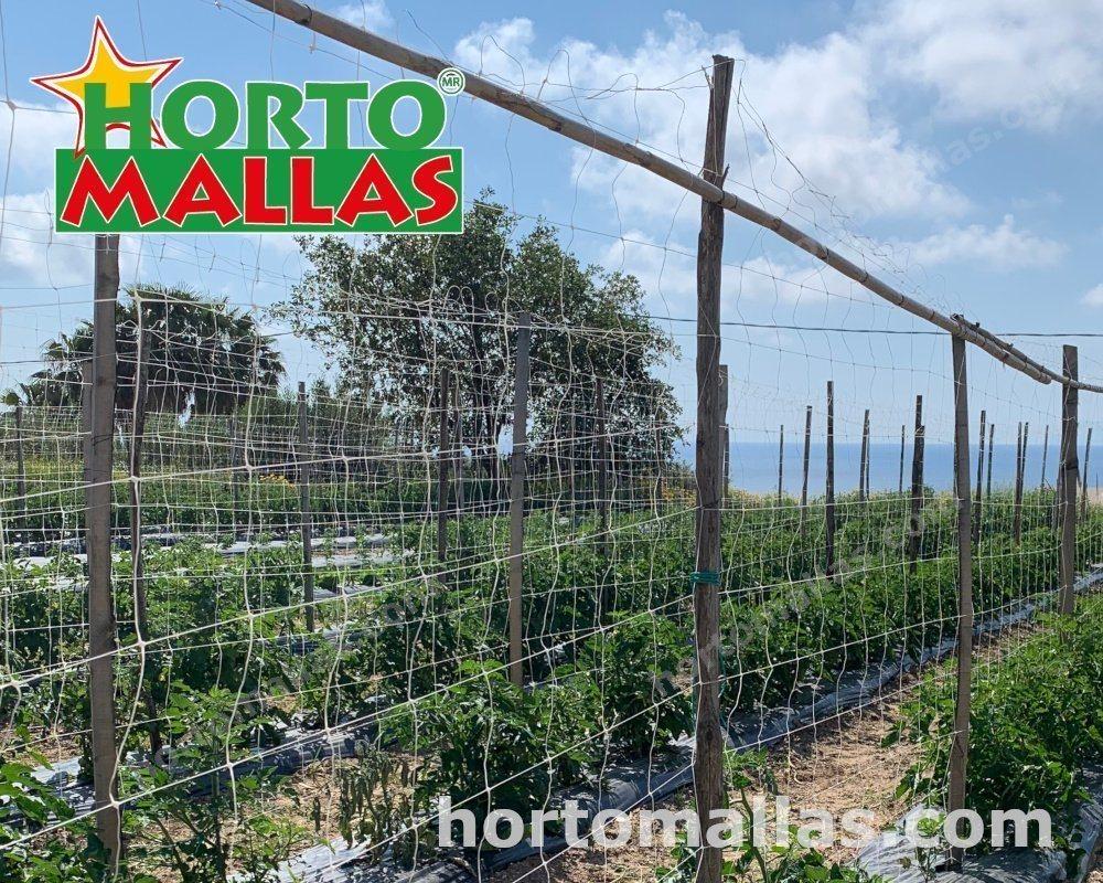 la malla espaldera HORTOMALLAS® siendo utilizada para el tutoreo vertical de hortalizas