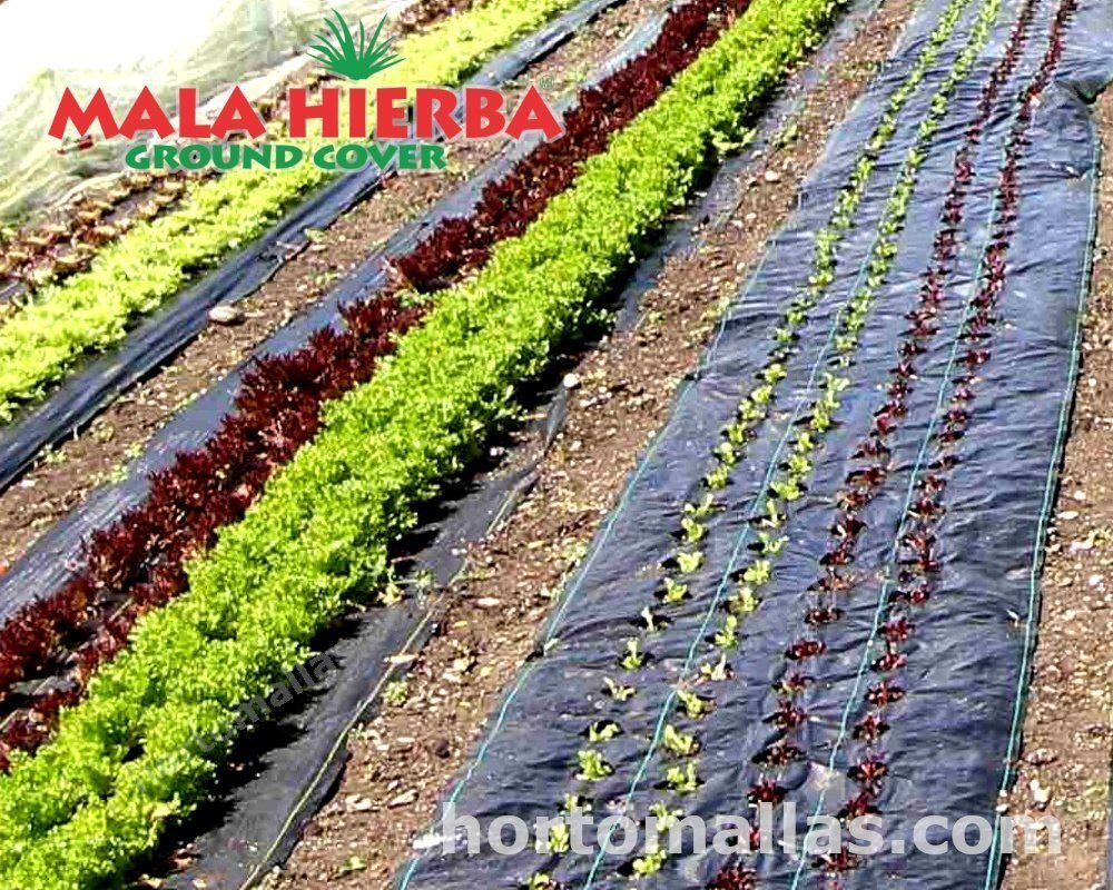 Con MALAHIERBA® groundcover evitas que la maleza le robe nutrientes a tus cultivos.