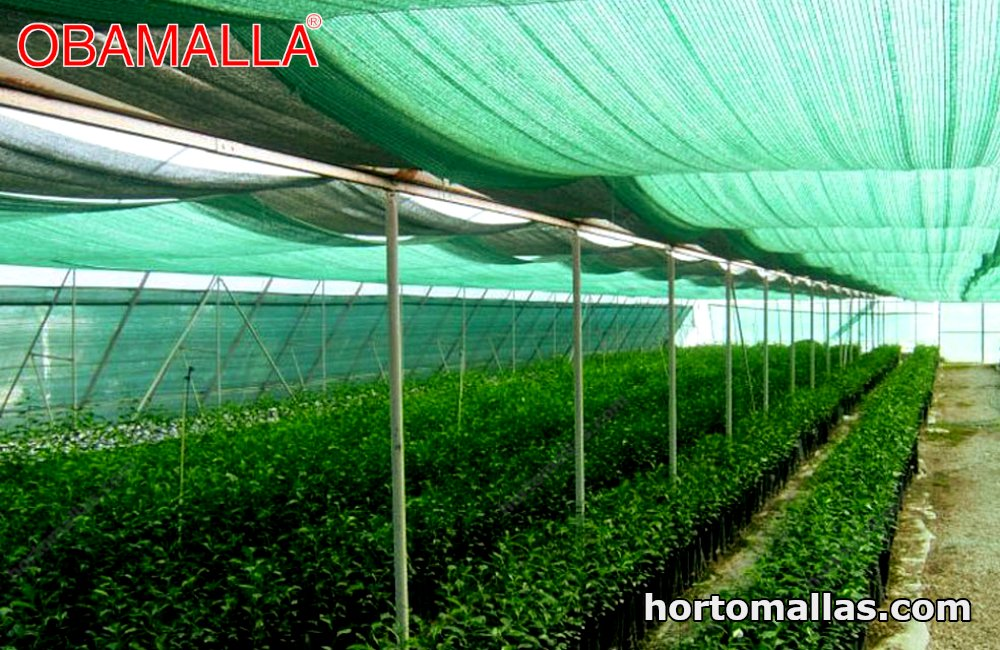 Green shade net OBAMALLA® Protection for a crop of various species of ornamentals.