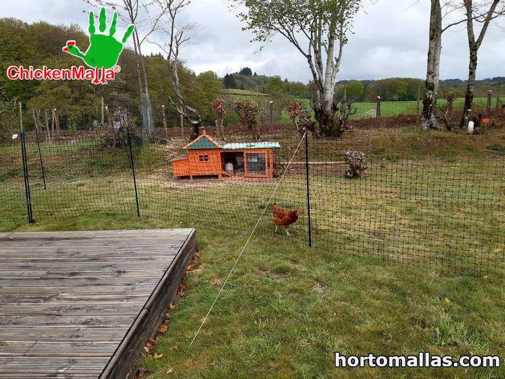 Chicken pens for grazing chickens are easily made with HORTOMALLAS® poultry netting, which is called CHICKENMALLA.
