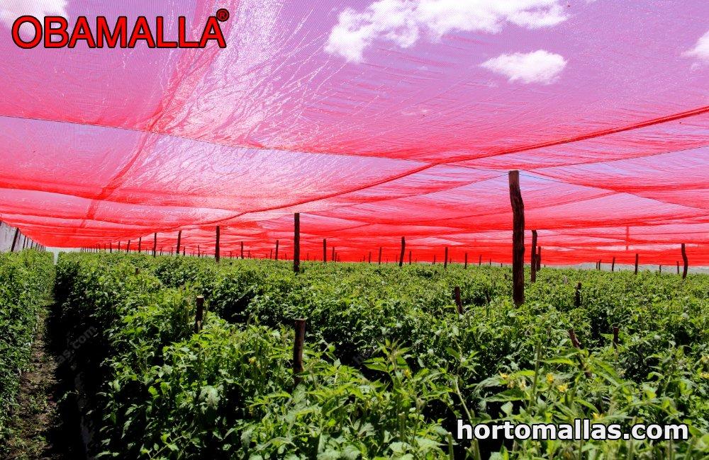 Color shade mesh in crop