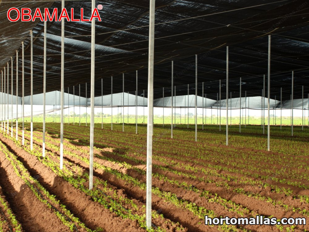 The shade network helps control evaporation and takes care of the plantations from excessive sunlight.