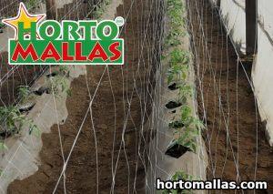 trellis net tomatoes