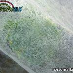 Manta térmica horticola