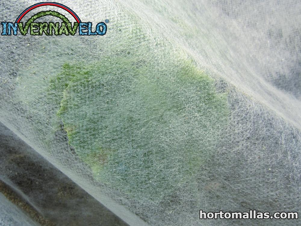 Uso de Malla Hortícola en Camas de Cultivo Elevadas