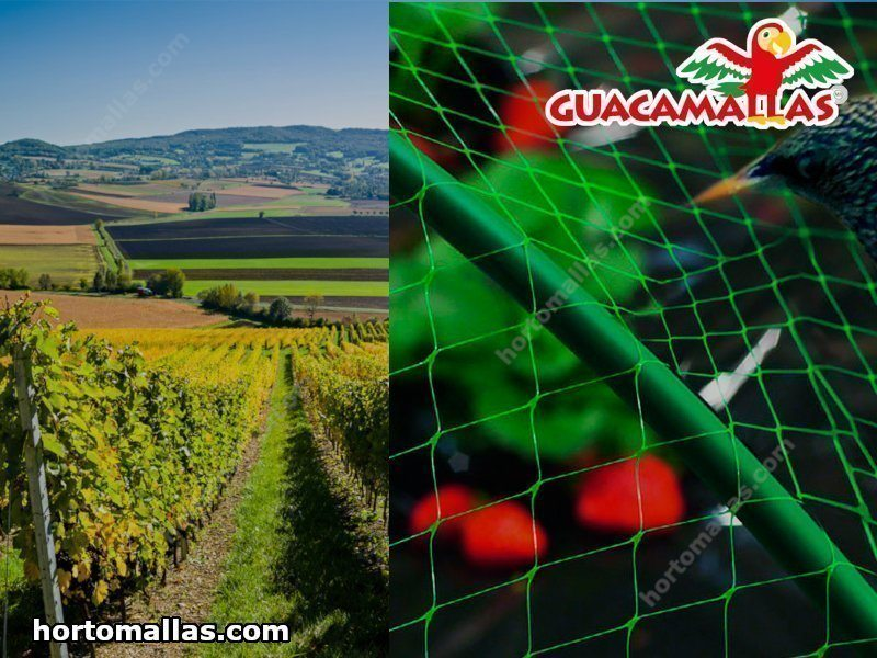 Malla antipájaros sobre viñedos