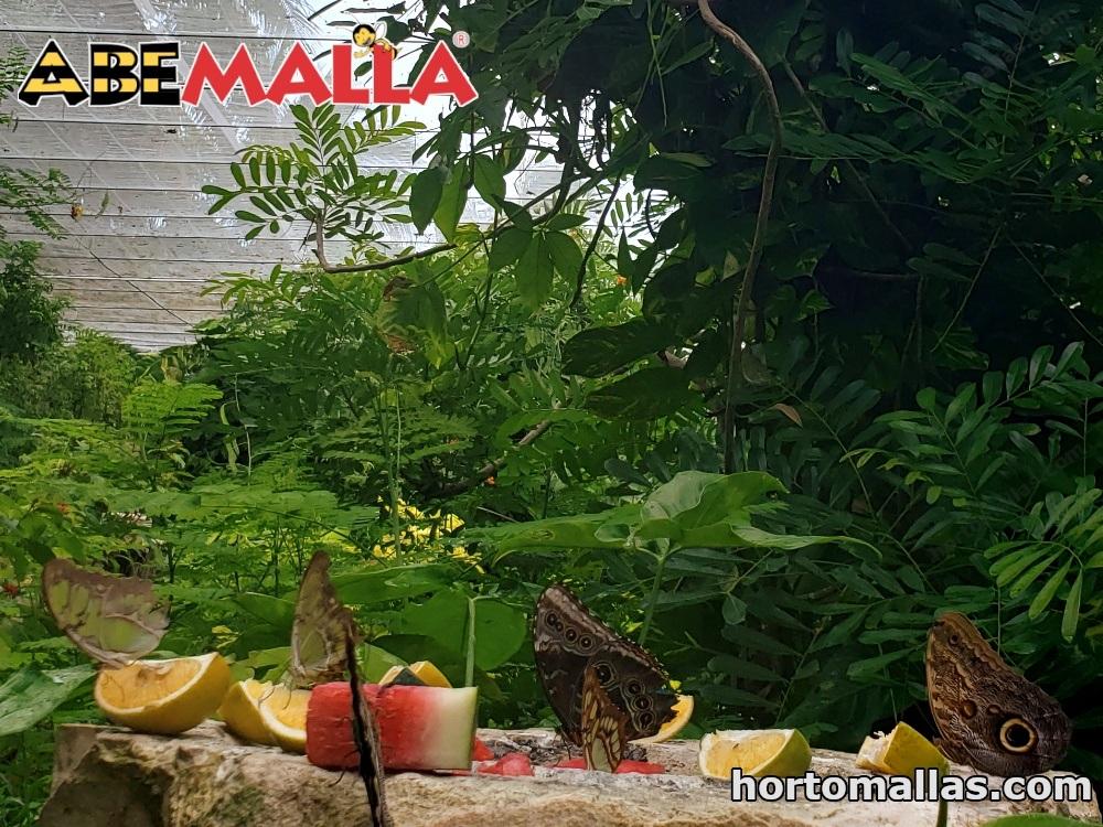 Malla ABEMALLA® instalada en criadero de mariposas