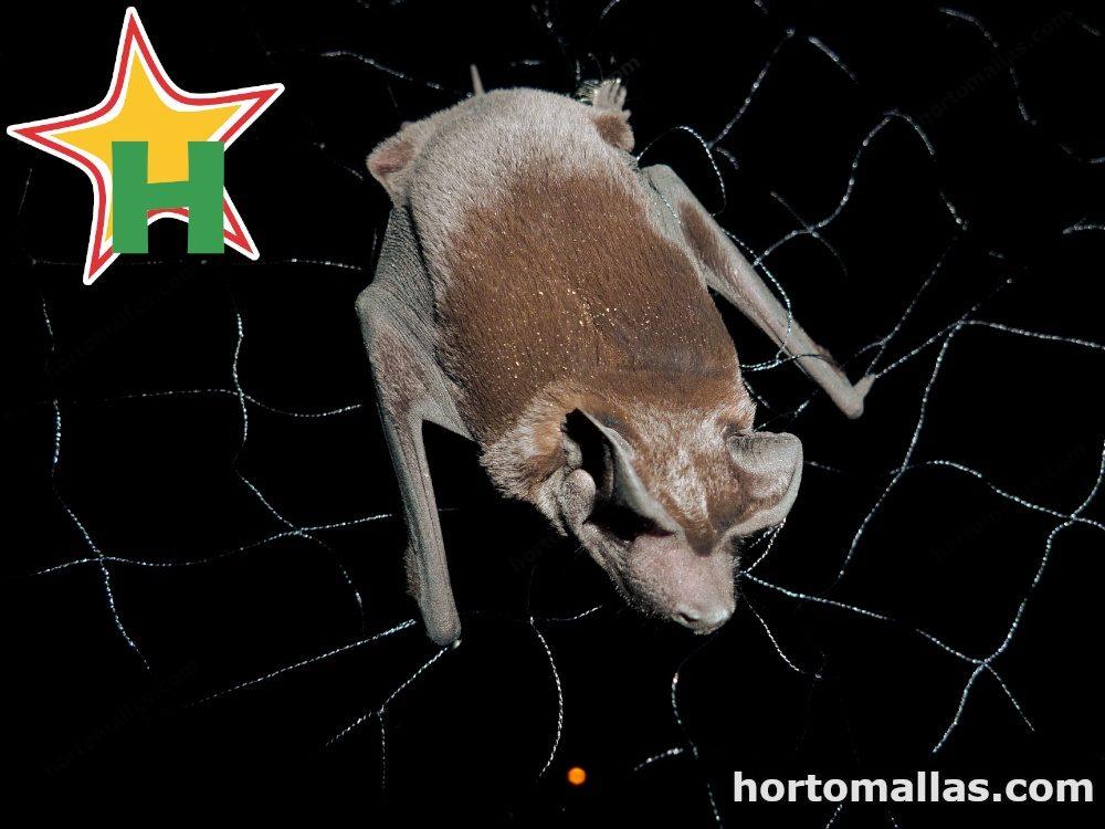 Red para atrapar murciélagos hematófagos