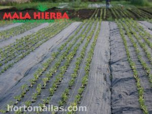 MALAHIERBA® Ground cover