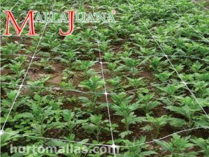 MALLAJUANA Sog Support and Scrog Netting
