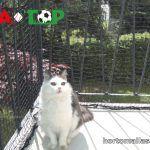 malla protección para mascotas