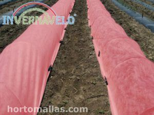 Photo-selective Thermal Blanket for Forced Cultivation System