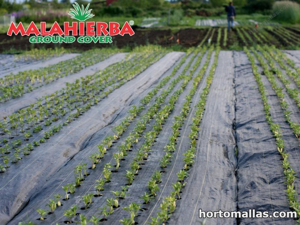 plantaciones protegidas con tela anti hierba