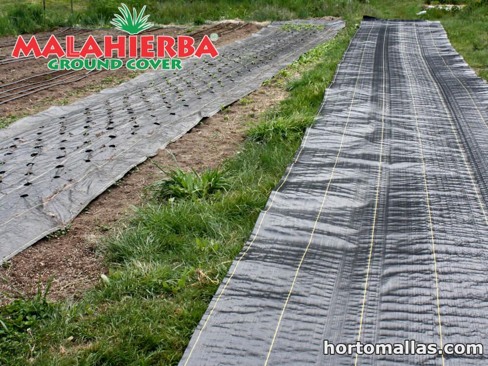 tela mala hierba colocada sobre jardín de cultivos