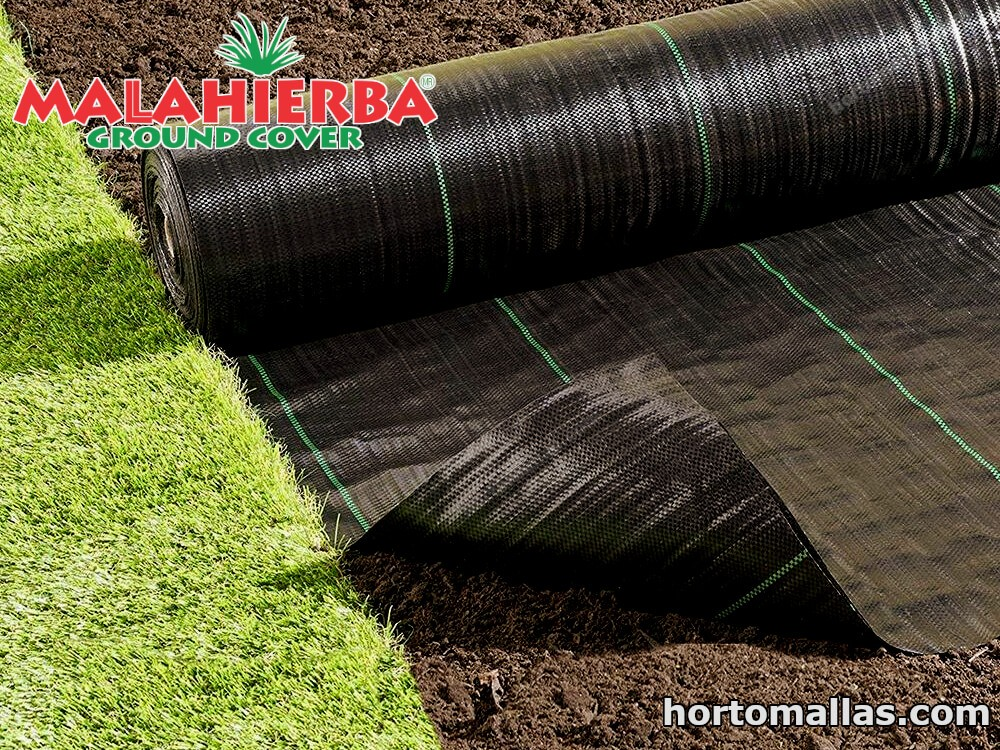 Ervas-daninhas ou vegetação indesejada no cultivo.