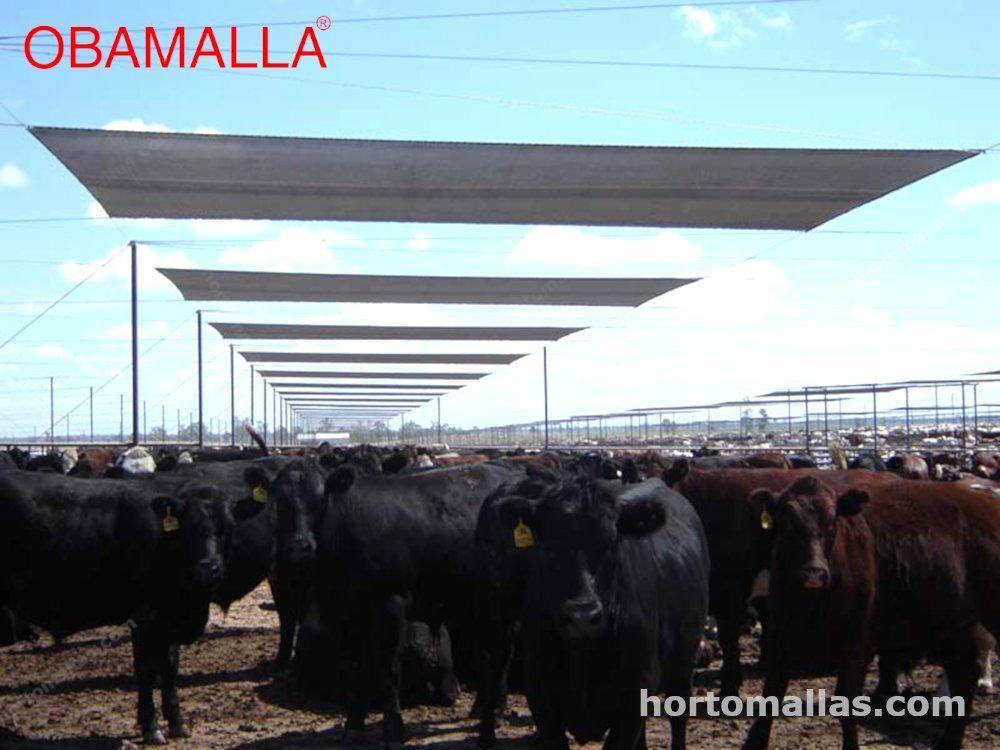 Malla sombra en ganado bovino