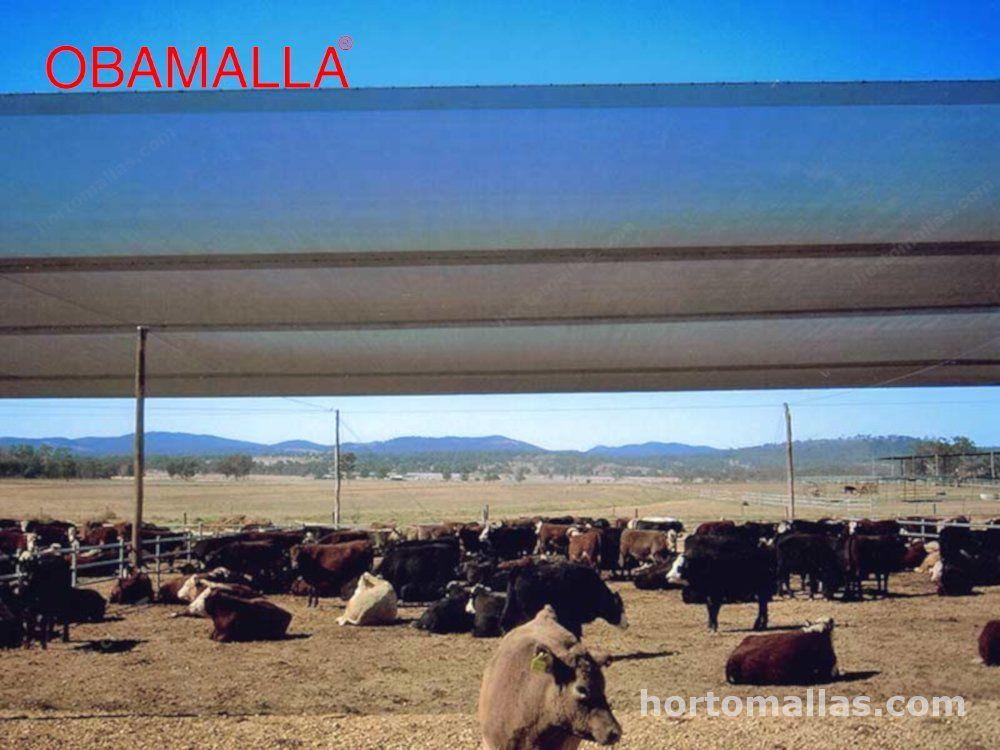 Obamalla evitando el estrés calorico en vacas