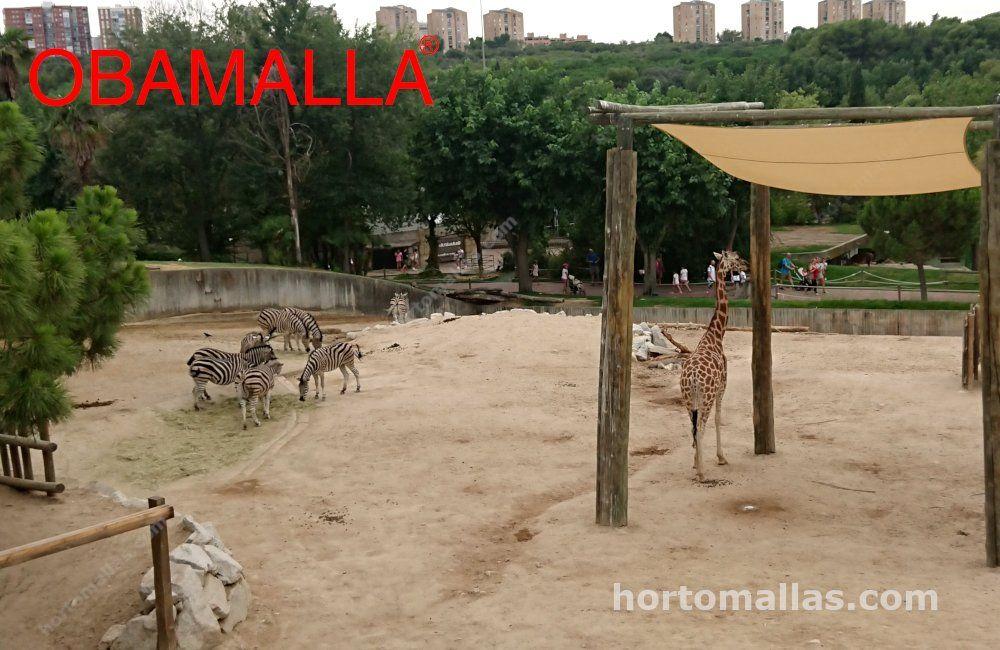 Obamalla instalada en zoológico
