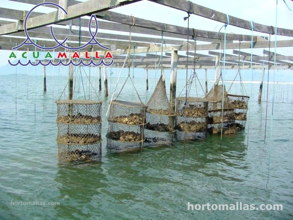 sistema de suspensión para cultivo de ostras